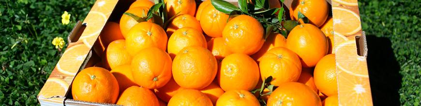 Naranjas del campo a tu casa en 24H