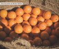 ¿Por qué no pueden faltar las naranjas en casa en invierno?