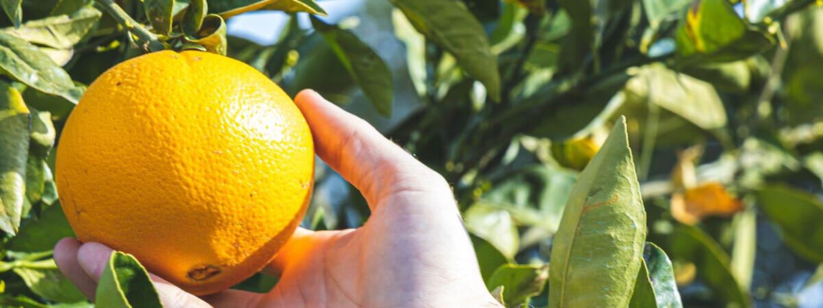 Usos de las Cáscaras de la Naranja