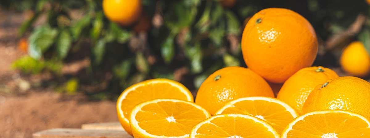 Información sobre la Temporada de Naranjas