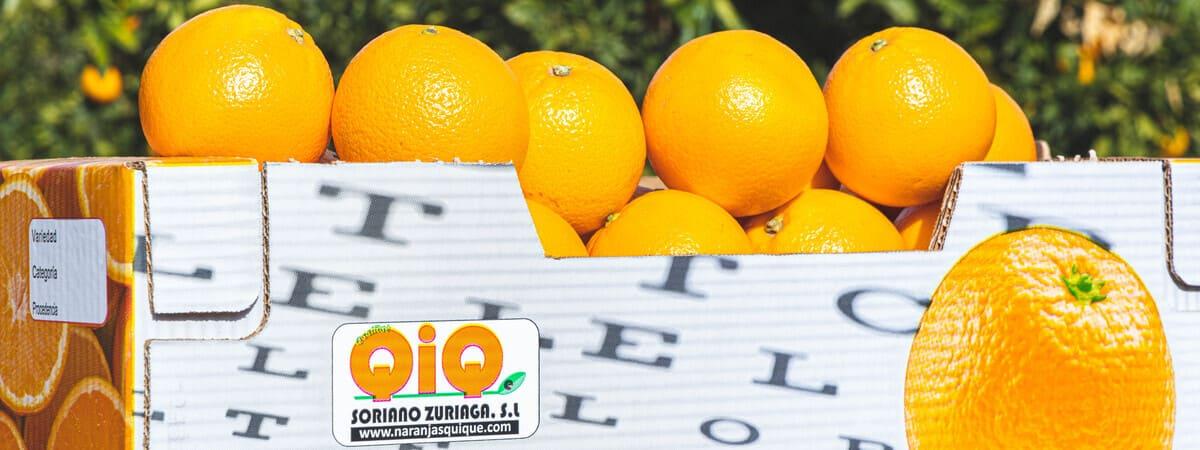 La Temporada de Naranjas en España