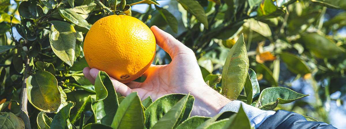 Las Mejores Naranjas para el Estreñimiento - Ricas en Fibra
