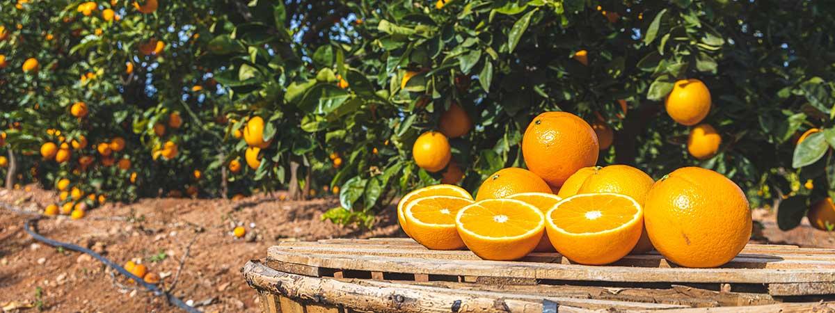 Tipos de Naranjas - Naranjas Navelinas