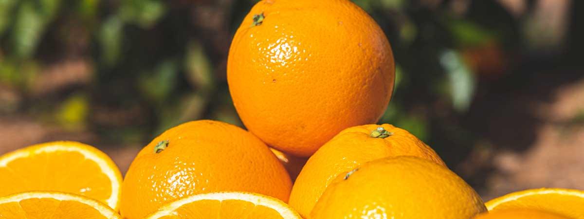 ¿Cuándo plantar las naranjas?