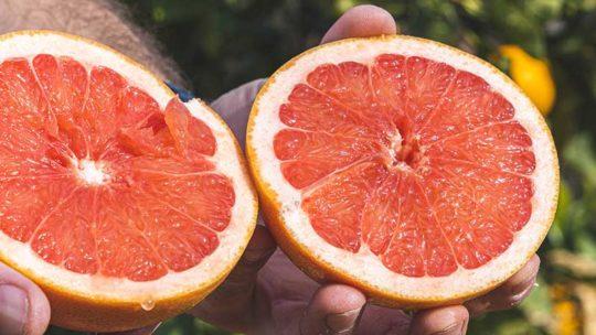 La Temporada de la Naranja Sanguina