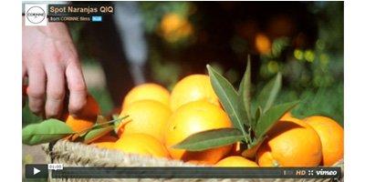 Spot Oranges Online Quique